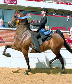 Welcome To The Saddle Seat Equitation Information Source